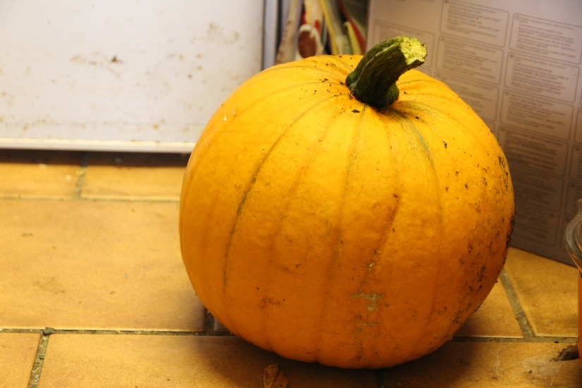 What to do with left over pumpkin?